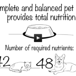 How Pet Food Is Made