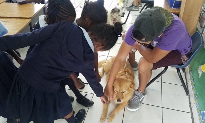 Dog Day Afternoon at Claridge Primary